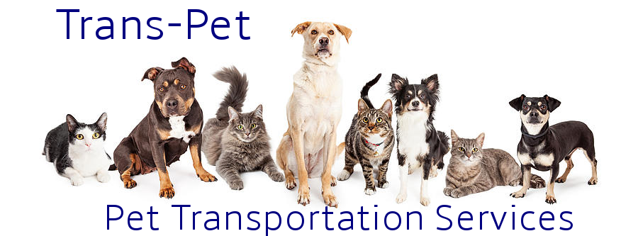 Pet Transportation Services Pet transport to and from the UK to Spain, Costa Blanca