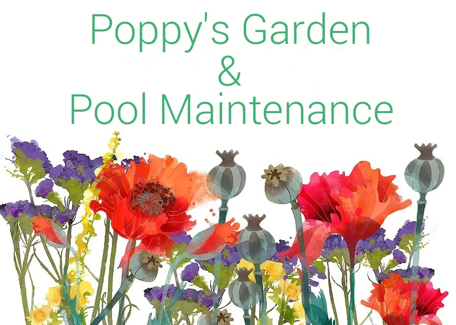 Gardening Services and Garden Maintenance Los Alcazares Mar Menor